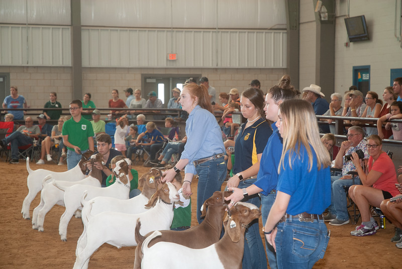 Tulsa_2019_goat_wether_day2-17