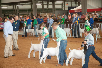 Tulsa_2019_goat_wether_day2-14