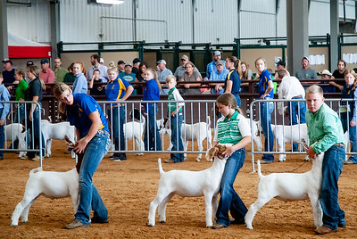 Tulsa_2019_goat_wether_day2-12