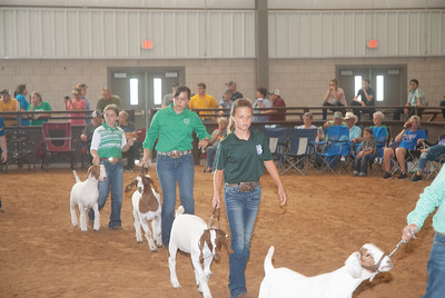 Tulsa_2019_goat_wether_day2-4