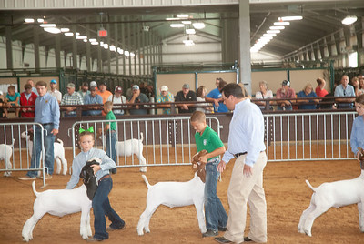 Tulsa_2019_goat_wether_day2-13
