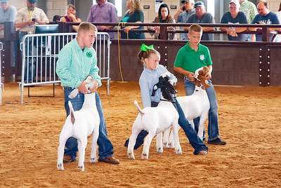 Tulsa_2019_goat_wether_day2-15