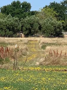 Hayse Ranch_3979