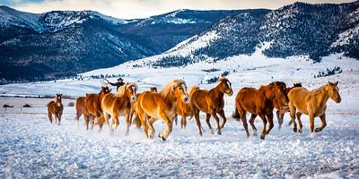 Westcliffe Horses #4168