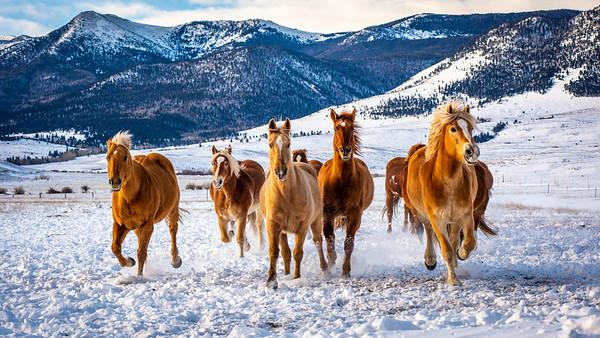 Westcliffe Horses #4207