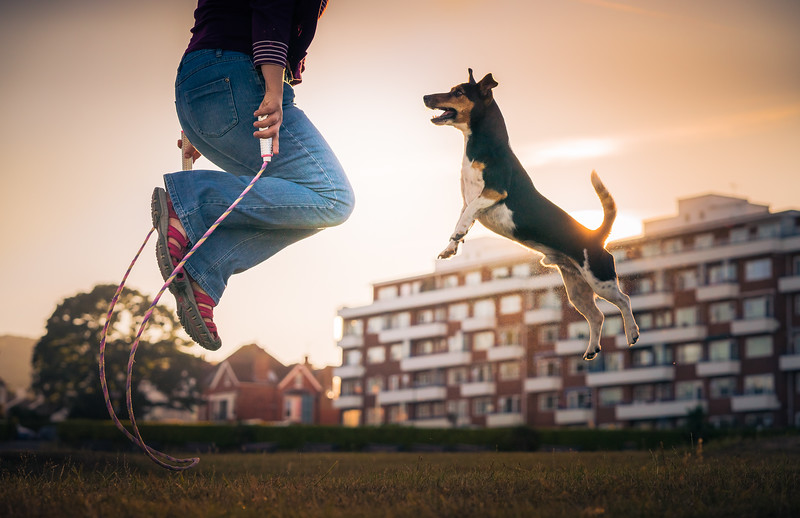 Dogs at Play Category 2nd Place Winner,  Zoltan Kecskes, UK