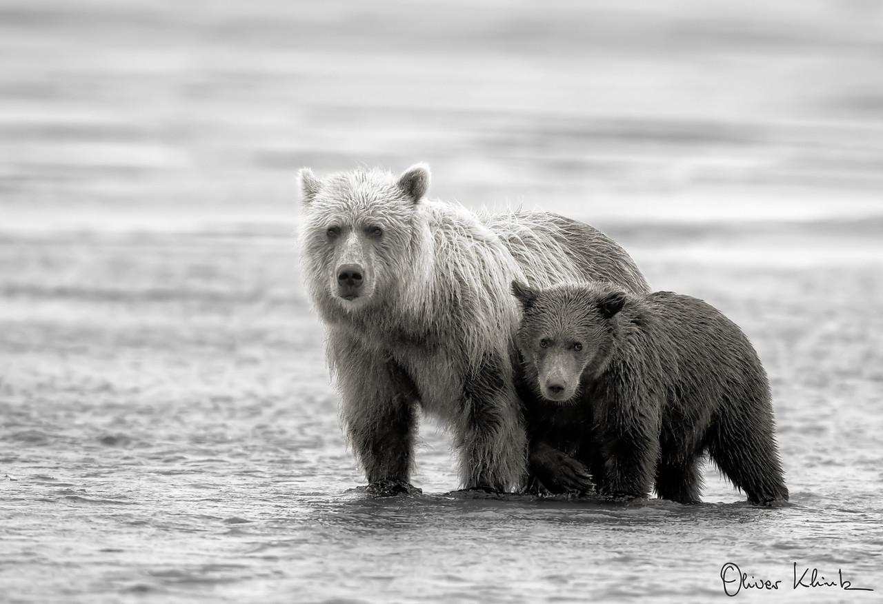GrizzlySSC--020