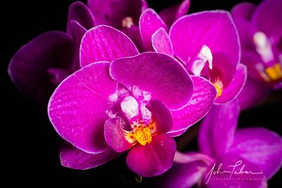 Orchid in macro