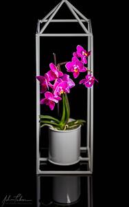Orchid in hanger
