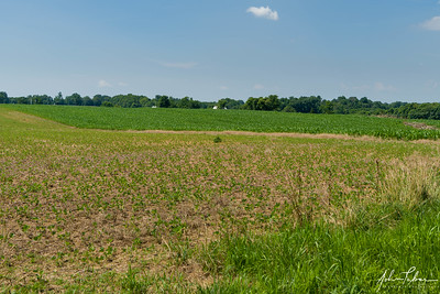 The Cornfield (north end looking south) at Antietam National Battlefield