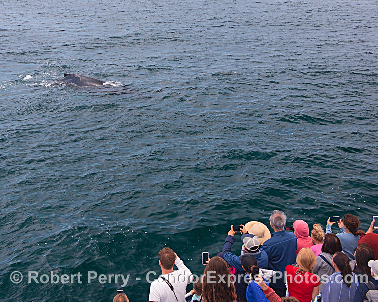 A friendly humpback visits its fans.