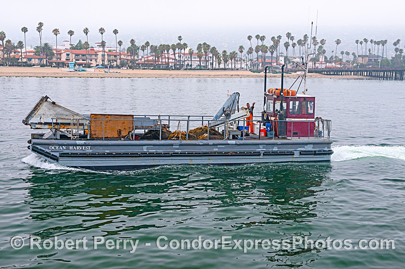 Kelp cutting barge.  The only current use for harvested kelp is to feed abalone at the abalone farm.