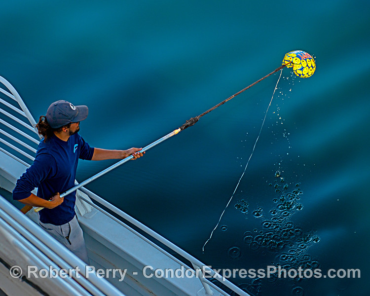 Deckhand Devn puts the gaff on a Mylar balloon and removes it from the environment.