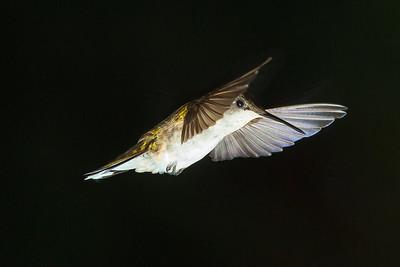 DA022,DN,Cleared_for_landing