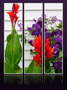 DA047,DA,Canna and Clematis against the garage wall