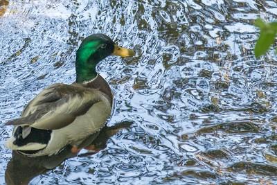 DA110,DN,Enjoying an afternoon swim