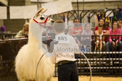 montanaag-84