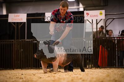 montanaag-454