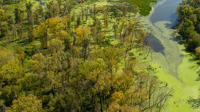 DA040,DN,Aerial_Of_Green_Yuch_In_Mississippi_River_Slough
