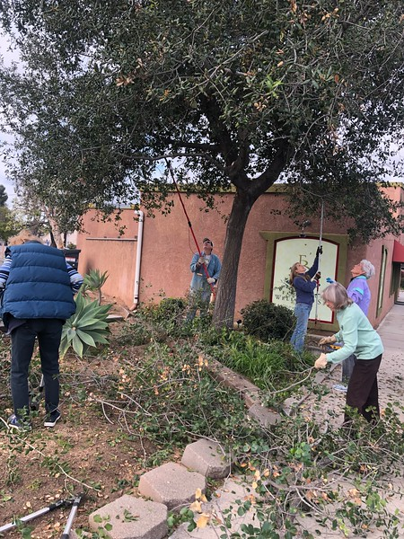 Volunteers prune the oak tree next door to the Wellness Spa on Alvarado in preparation for the new pocket park.