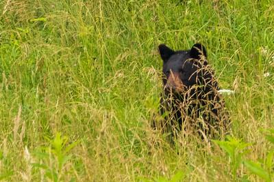DA110,DN,Hiding in the Grass