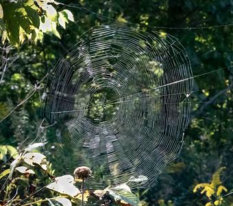 DA111,DN,The Web on the Prairie
