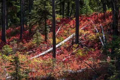 DA054,DP,Fall Huckleberry Color