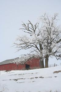 02,DA016,DP,RED IN THE SNOW