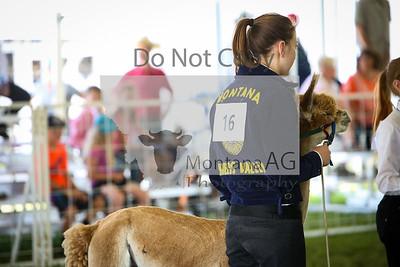 montanaag-8