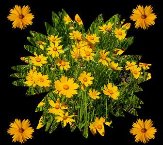 DA054,DA,FlowerPatterns