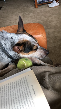 Decorative picture of our dog harper snuggled into a chair with a ball and a book.