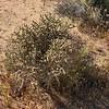 thin cactus