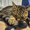 MET 041719 Cute Cat