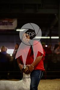 CF19-ASF-8287