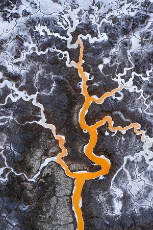 The Tree of Salt
