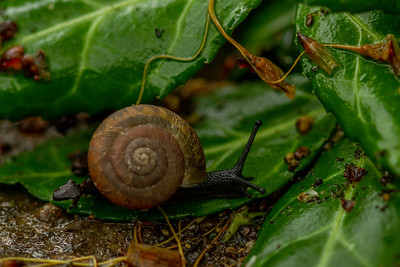 Snail After the Rain