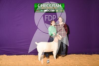 DO19-Checlocal-7702