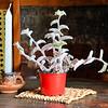 Plant in Cafe Jesus Martin