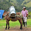 Man and donkey used to transport milk in Valle del Cocora