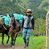 Man and donkeys in Valle del Cocora