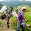 Men and donkey in Valle del Cocora