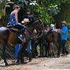 Tourists on horses