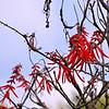 Flowering bush in Solento