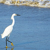 Yellow-footed egret on Cartegena beach