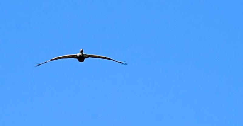 Bird in Cartagena