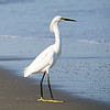 Bird on Cartegena beach