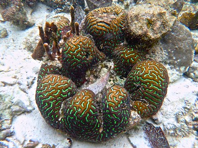 Planar maze  coral