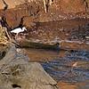 Bird st the Crocodile river