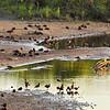Birds at the Crocodile river