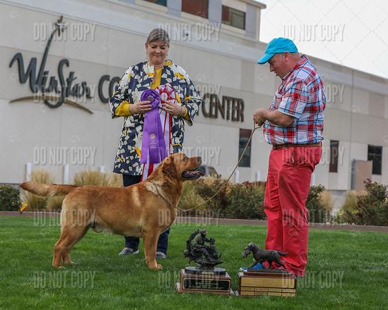 Friday | Winners Dog, BOS